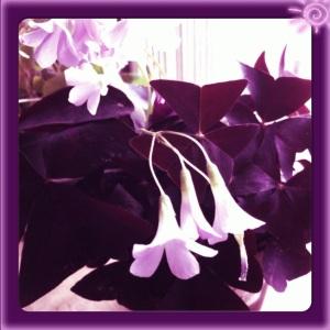 Rachel doesn't do purple clothes, but she does purple flowers.