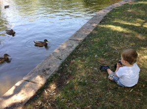 We played with ducks in the Gardens.