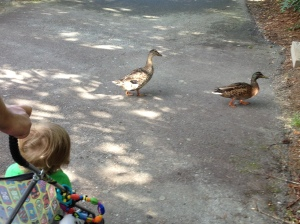 I think Connor would really enjoy having pet ducks in our backyard. Chris disagrees.