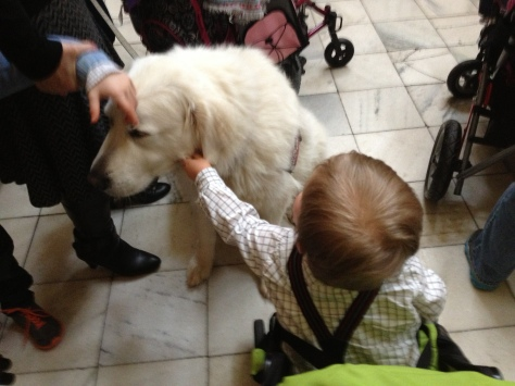 It's hard to tell a delighted toddler that you aren't supposed to pet service dogs :)